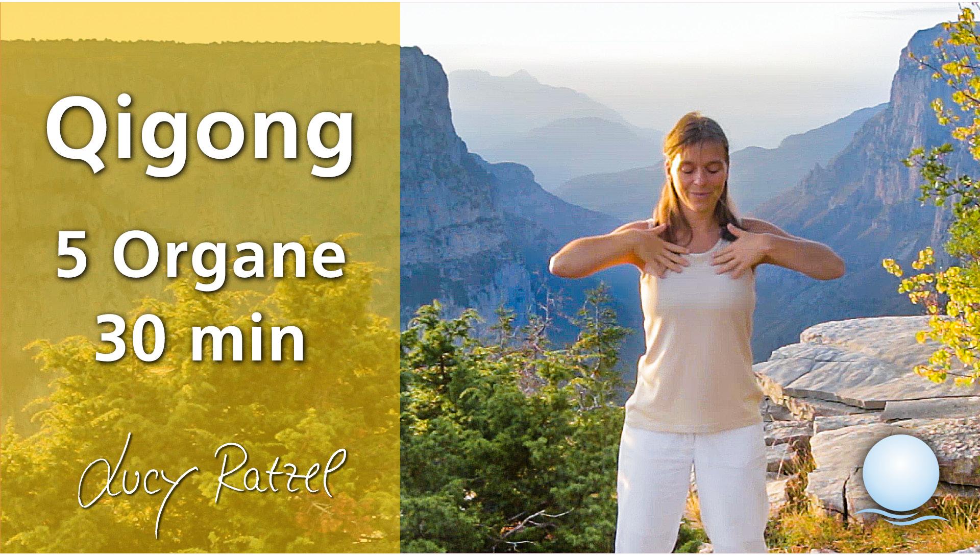 Qigong 5 Organe